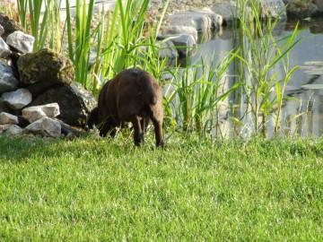 Tó környéki állatok (kutya-macska)