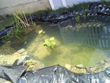 Vízinövények beültetése