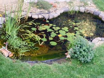 3 éves kerti tó