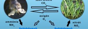 Baktériumok avagy a bioszűrőről elméletben