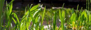Kerti tó tavasszal, növények, vízforgatás bemutatása