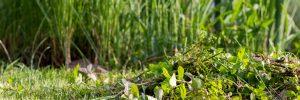 Tavaszi munkálatok a tó körül, növények ritkítása