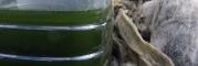 kicsavart zöld víz